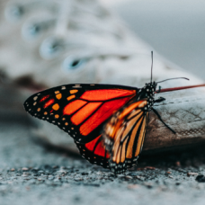 Sneaker and a butterfly